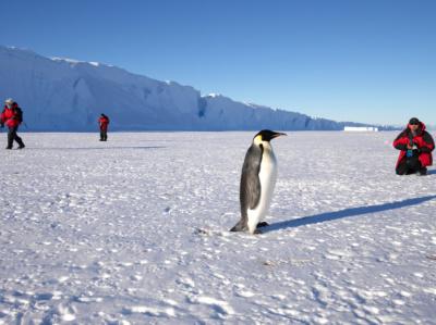 Icetrek-Emperor-Penguins-Krone-Bay-Antar